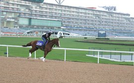 California Chrome slips easily into that starring role back at Meydan