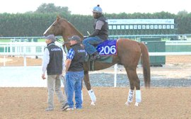 Excitement builds as breeders snap up shares in California Chrome