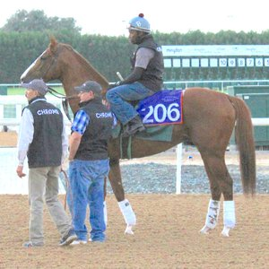 Excitement Builds As Breeders Snap Up Shares In California Chrome Topics Taylor