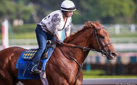 SA Derby could cap big week for Dana Barnes, morning pilot for Baffert's best