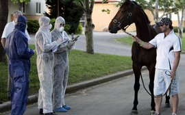 Still counting the cost of equine influenza in Australia