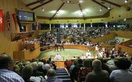 New Zealand Breeders Look Forward