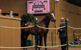 Yearling market maintains strong momentum as buyers out in force at Keeneland