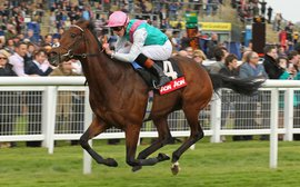 Figures show it's likely to be a high-quality 2000 Guineas