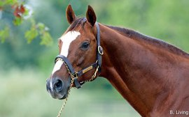 Kittens Abroad: Ramseys' Global Plans for Foundation Sire (Pt. II)