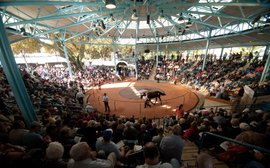 Yearlings come to Sydney for the greatest Easter show on earth