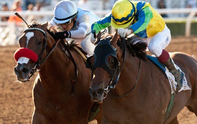 Sport - Horse Racing - CNN.com