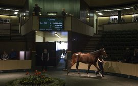 Yearlings to watch: 10 of the choicest lots at the Goffs Orby Sale