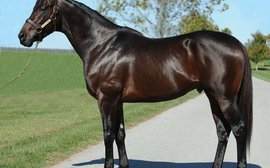 Stunning start for first crop marks Warrior's Reward a stallion to watch