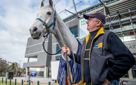 How Subzero became Australia's horse