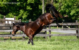 Children of Secretariat: the old charmer still kicking up his heels at 28