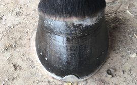 Does your horse really need to wear shoes? Insight from a leading farrier