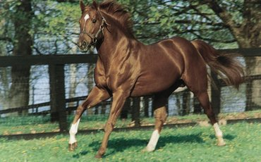 Racing industry poll: America's Top Ten horses of the last 50 years