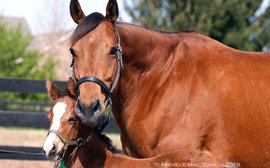 Transformed by parenthood: fiery Lady Eli is now a gentle, nurturing mother