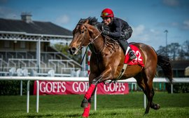 Why the Goffs UK breeze-up catalogue looks sure to appeal to international buyers