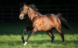 Prolific sire Fast Company dies at the age of 15