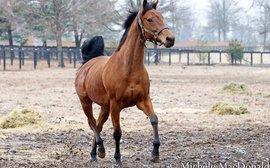 Is Lady Eli beginning to mellow now she's preparing for a new career?