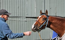 Dandelion leaves and Derby preps: that's life with John Shirreffs for two live Kentucky hopes