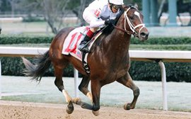Road to the Kentucky Derby: genuine One Liner looks another key player