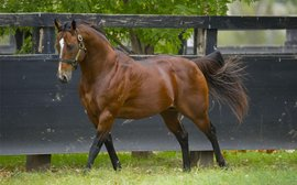 Stunning weekend rockets Snitzel up the world sires' rankings