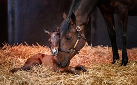 Just a few hours old: meet Treve's new daughter