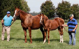 The Triple Crown mares on the verge of creating their own dynasties