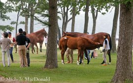 An equine treasure trove to give you goosebumps