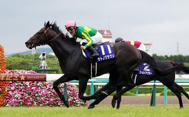 The horse who could help take the Breeders' Cup to the next level of globalisation