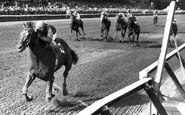 Unforgettable Alydar: remembering one of the true greats