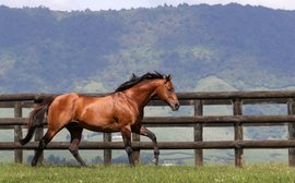 Breeding industry mourns the loss of star stallion Pins