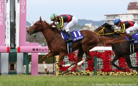 Is this Orfevre's first step on the road to becoming a super stallion?