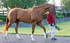 Why California Chrome is getting top marks for his work in the breeding shed