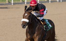 Inflexibility stretching out for Queen's Plate