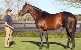 Shock death of young stallion is a huge blow for stud farm
