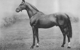 Tony Morris's 100 Shapers of the Breed: sire who became a staple ingredient