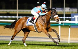 Lord Kanaloa may soon challenge Frankel as the hottest recent addition to the stallion ranks