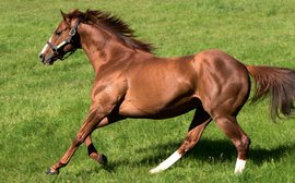 The stallion emerging as Frankel's main rival at the top of the second-season sires rankings