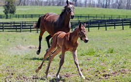 Meet the new half-sister to Beholder and Mendelssohn, and their remarkable mother