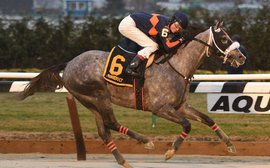 Road to the Kentucky Derby: El Areeb thrives in testing conditions