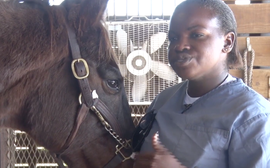 The all-action racehorse now playing a key role at a correctional institution