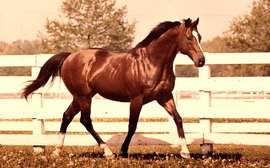 Northern Dancer and turf: soon only a few other sire lines may effectively exist