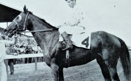 How many horses could have achieved what this filly did on such an arduous campaign?