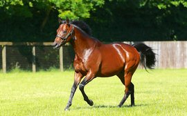 Could Kingman be another Juddmonte super sire in the making?