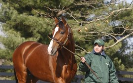 How Noble Mission is proving he can flourish in Frankel's shadow