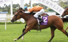Brisk business for top New Zealand mares