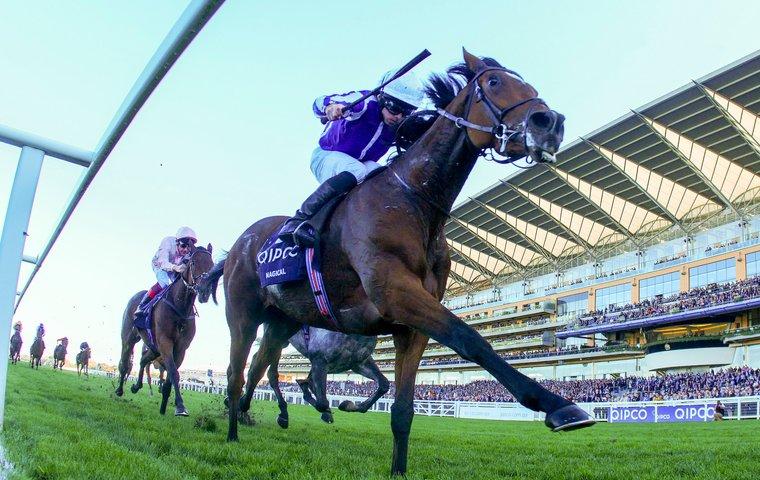 Horses who could be key for Aidan O'Brien next season | Thoroughbred