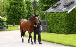 At home with the world's number one stallion