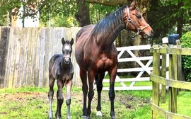 Guess which of last week's big G1 winners this little foal is now
