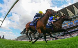 Breeders' Cup: there's no horse better qualified than this to run there this year