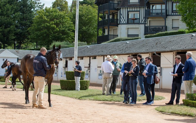 New wave of French sires helps make Arqana's Yearling Sale the place to be